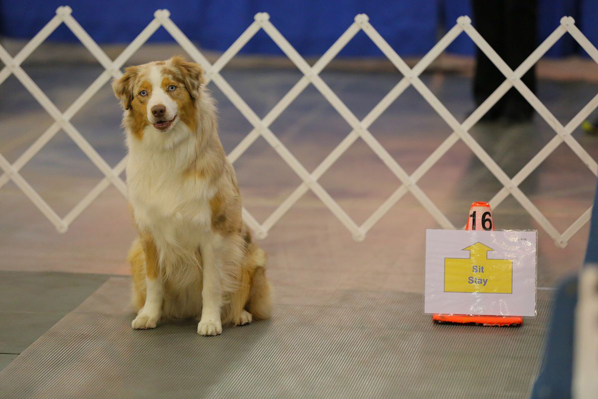 AKC Rally National Championship Comes to Tulsa