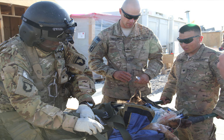 American Battlefield Surgeon Saves Czech Dog's Life After Taliban Attack