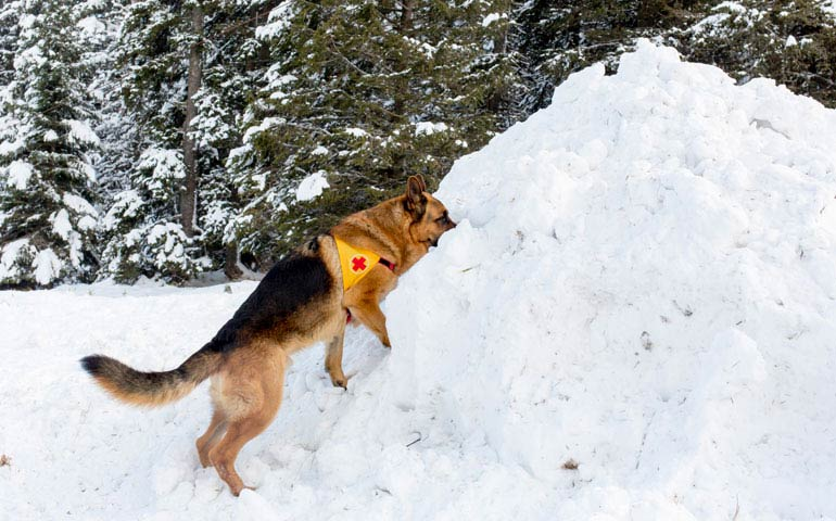 Two Dogs Played A Role In Saving Soldier Who Survived Deadly Avalanche
