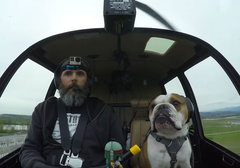 Meet The Bulldog Who Works as Helicopter Copilot In Canada