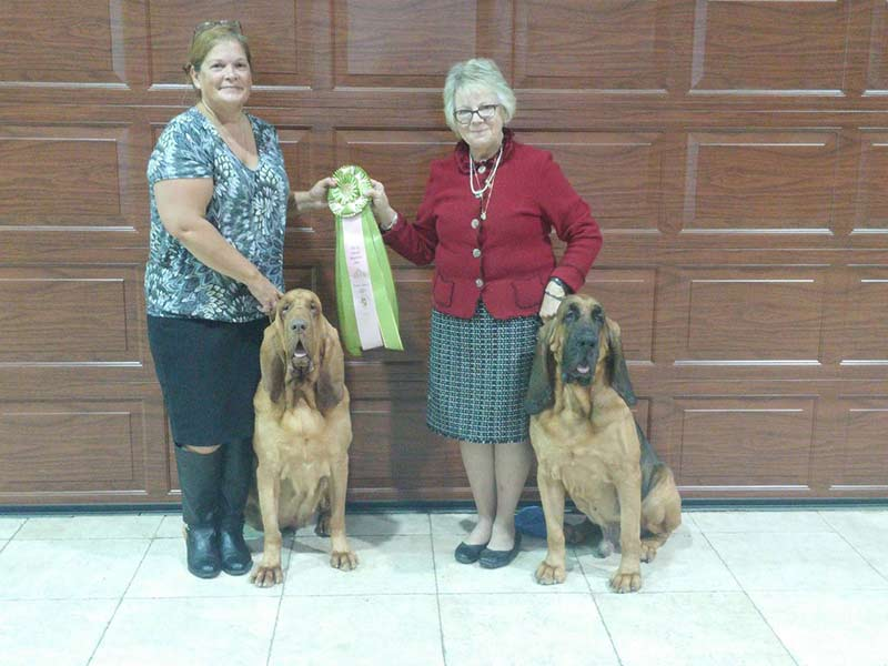 Bloodhound National 1