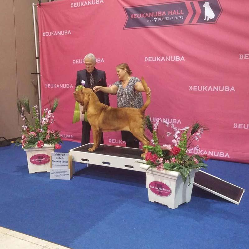 Bloodhound national 3
