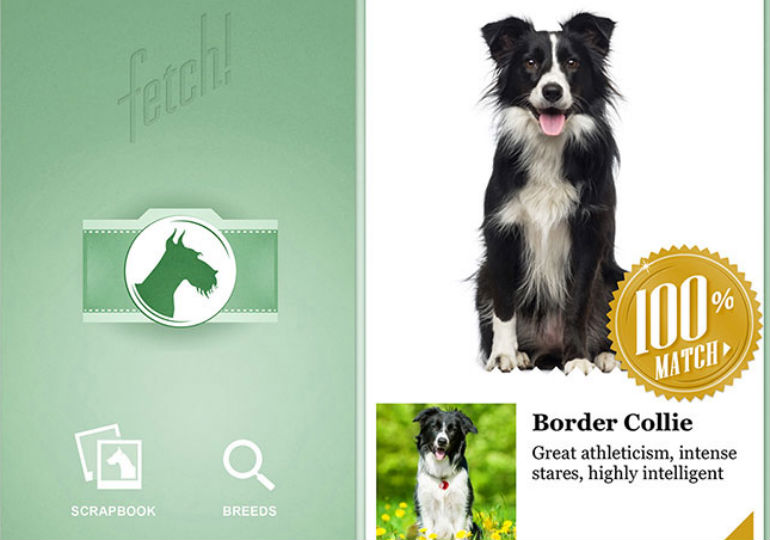 dog breed identifier app