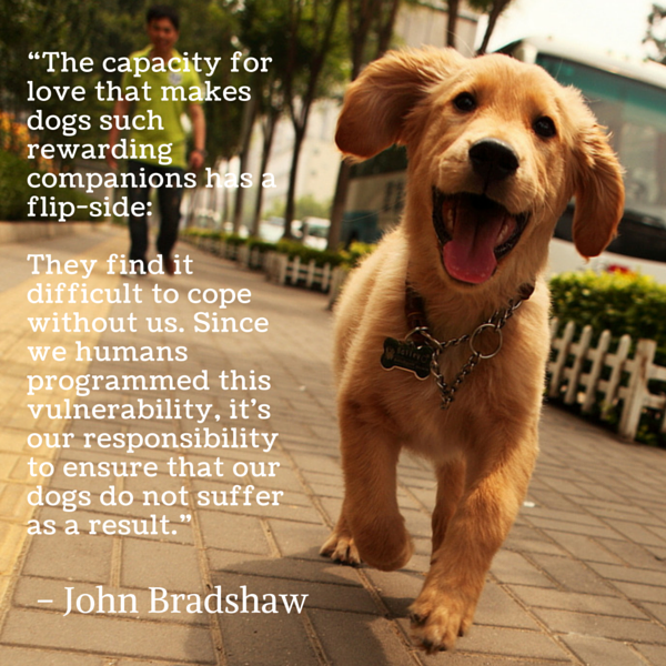 Dog Quotes We Rounded Up The Best Of The Best Stunning Quotes About Dogs Love