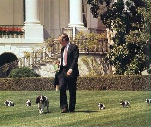 George Bush with Millie the English Springer Spaniel and puppies