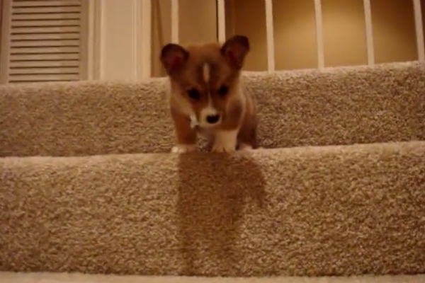 butterball on stairs
