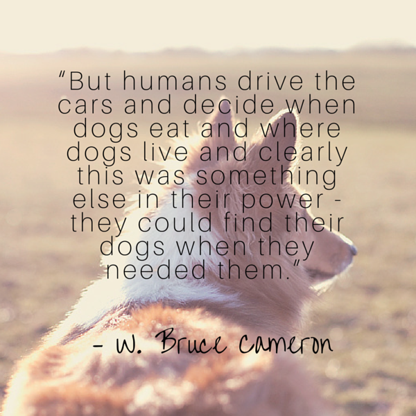 Cameron dog quote