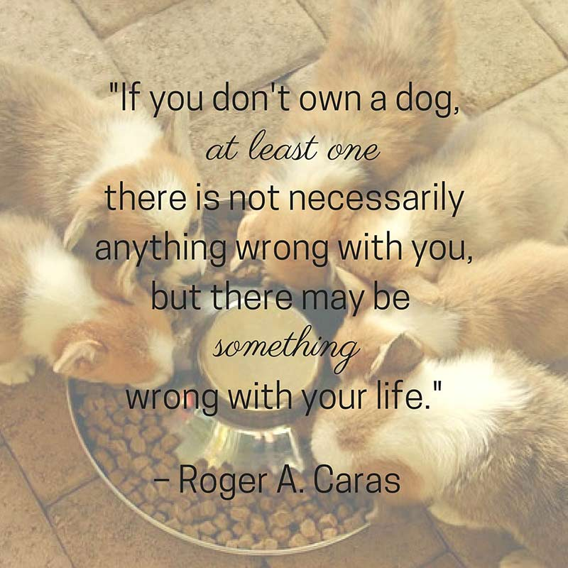 Dog Quotes We Rounded Up The Best Of The Best Inspiration Life Quotes By Authors