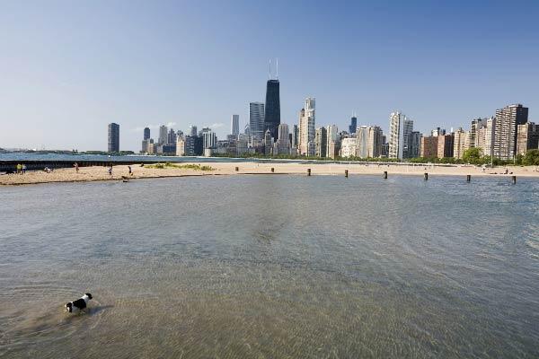 dog in Chicago