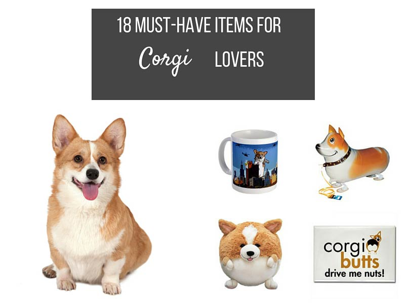 items a corgi owner must have