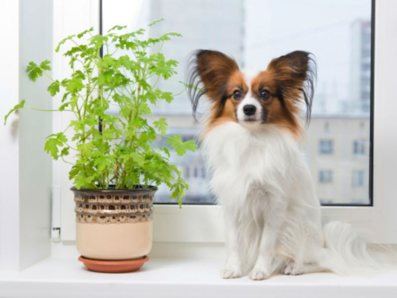 harmful plants for pets