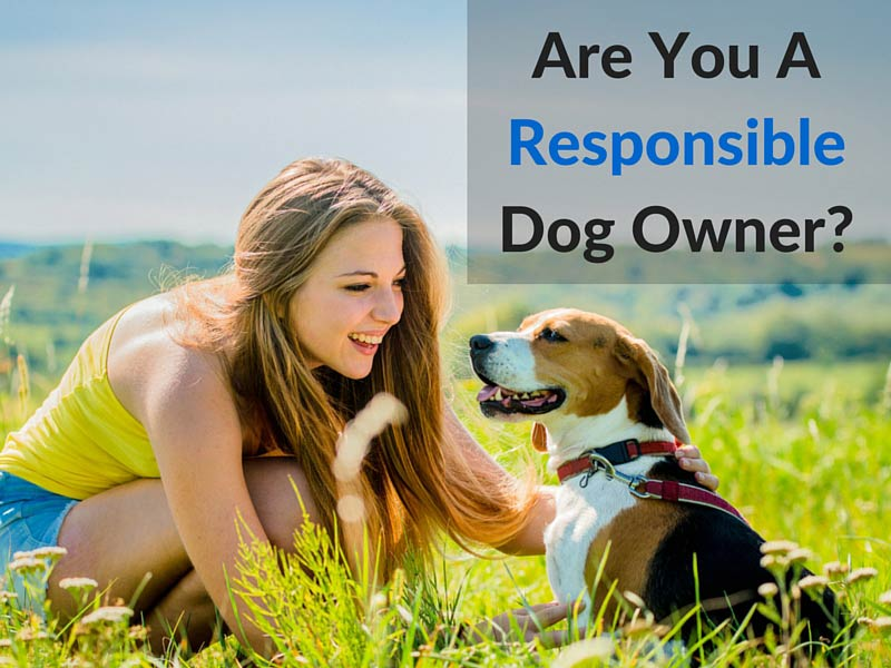 are you a responsible dog owner