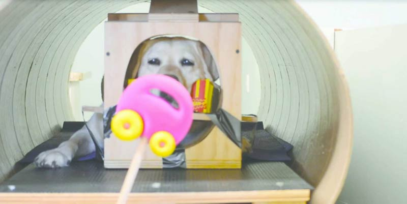mri dog with toy