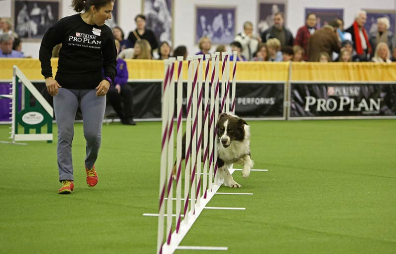Duthie and Tumble agility