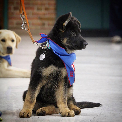 guide dogs for the blind scholarly articles