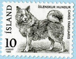 icelandic sheep dog stamp