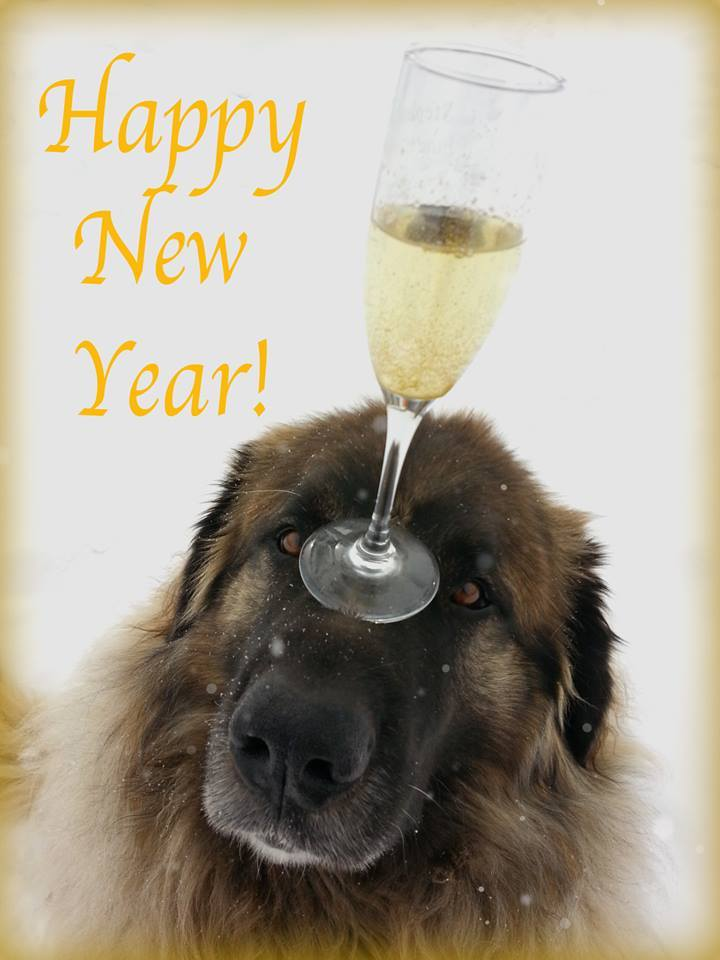 leonberger new year