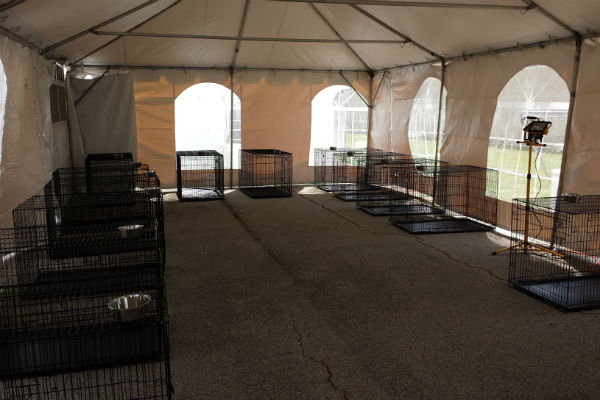 large dog housing set up