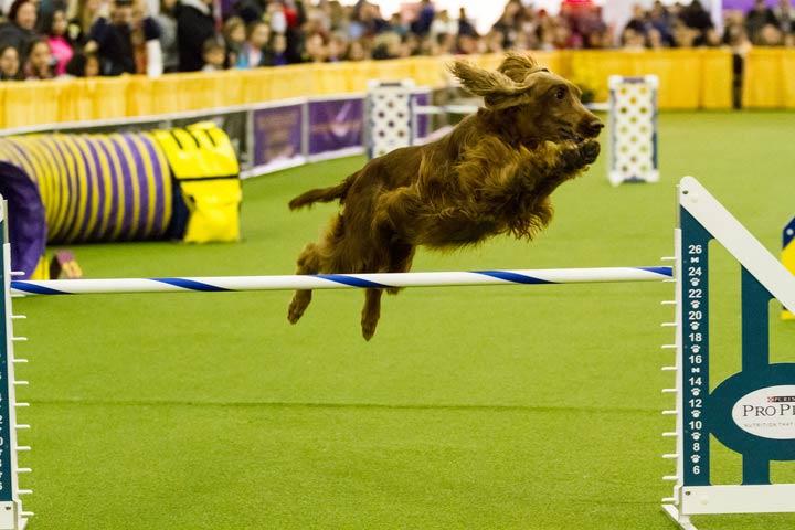 meet the breeds agility