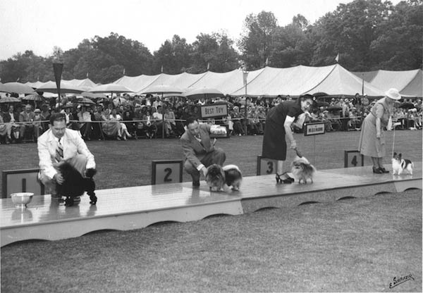 Ch. Ywain of Dulceda won fourth place in the Toy Group at the Morris & Essex KC show in 1952.
