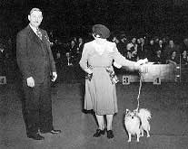 Ch. Bombay of Dulceda, the first homebred Dulceda champion, was Best of Breed at Westminster for three consecutive years. Handled by his breeder, Mrs. E.W. Kemmerer, he is pictured at a New York show in February, 1944.