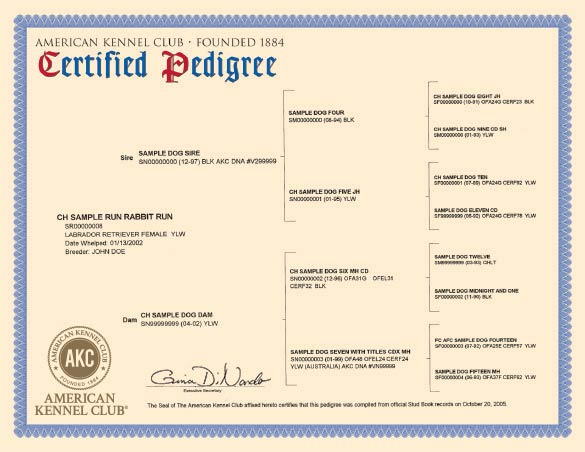 Discover Your Dog's Family Tree with an AKC-Certified