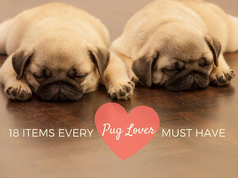 things-all-pug-lovers-need