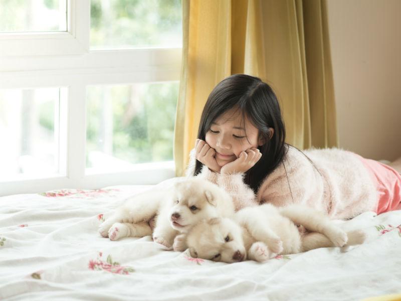 siberian husky puppies and child
