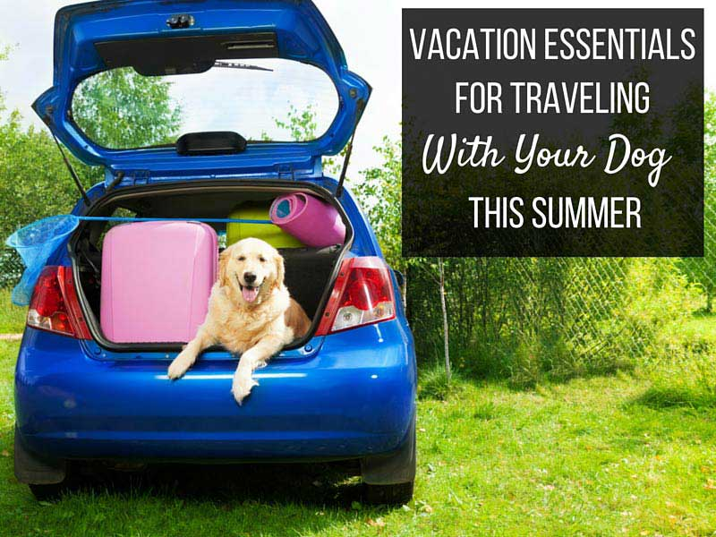 vacation essentials for traveling with your dog