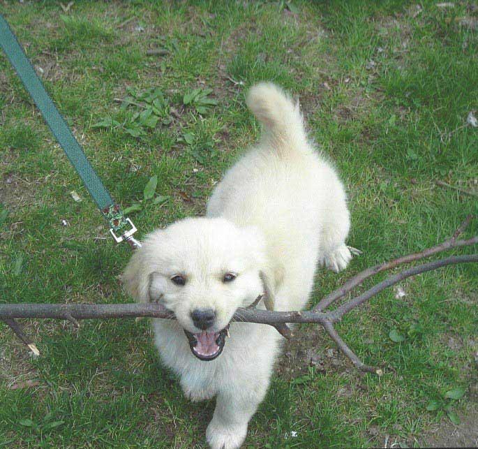 Abbie as a puppy