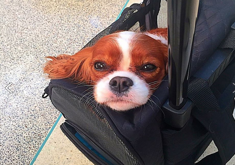 Top 10 Dog-Friendly Airports in the U.S.