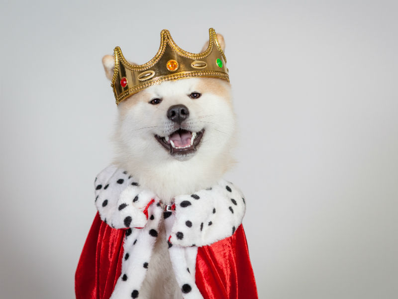 how to throw a dog halloween party