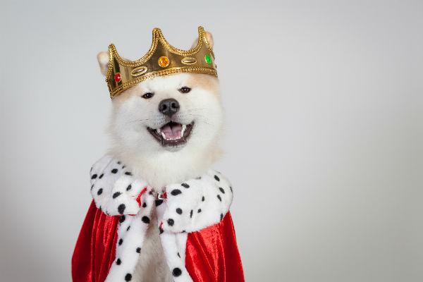 akita king