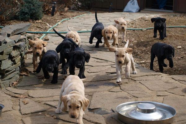 all_da_puppies