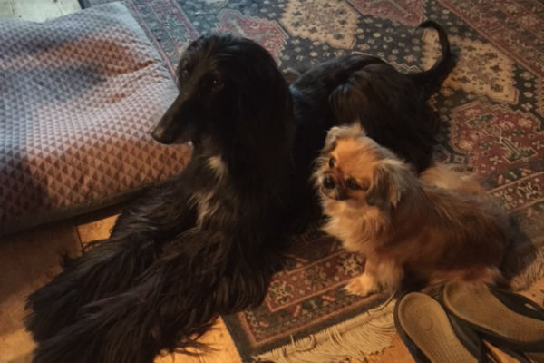 allan_dogs