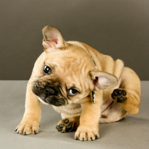 狗过敏:症状和治疗