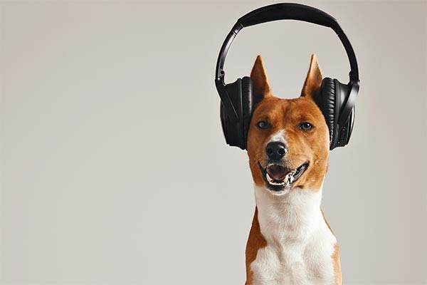 basenji-headphones-body.jpg