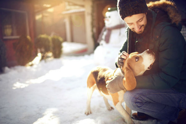 beagle snow paws