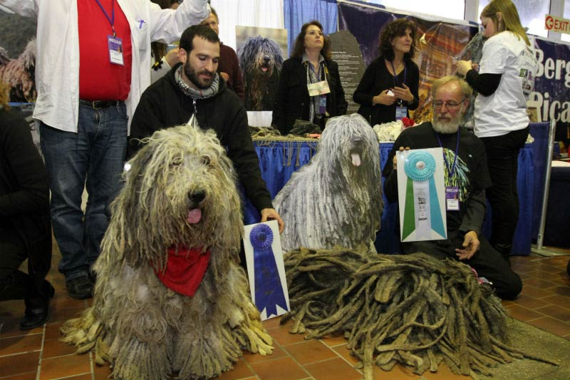 bergamasco booth at meet the breeds