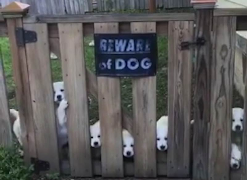 Beware of scary puppies