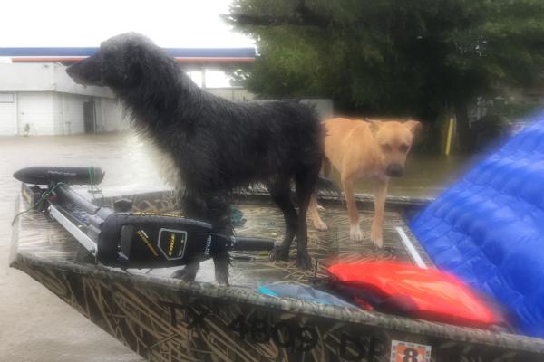boat_rescue_2