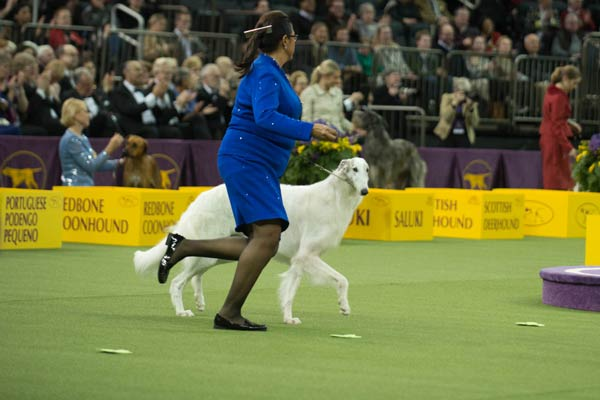 borzoi hound group winner 2018