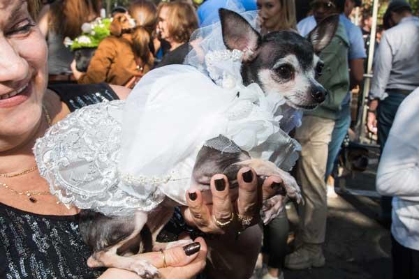 bride-dog