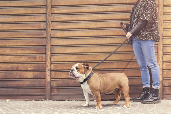 bulldog_leash