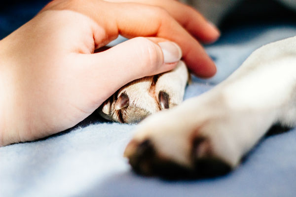 Distemper in Dogs - Causes, Symptoms, & Treatment – American Kennel Club