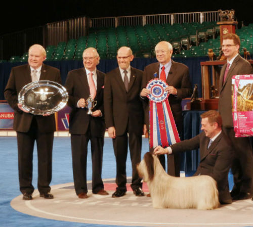 Charlie wins BIS at AKC Eukanuba National Championship