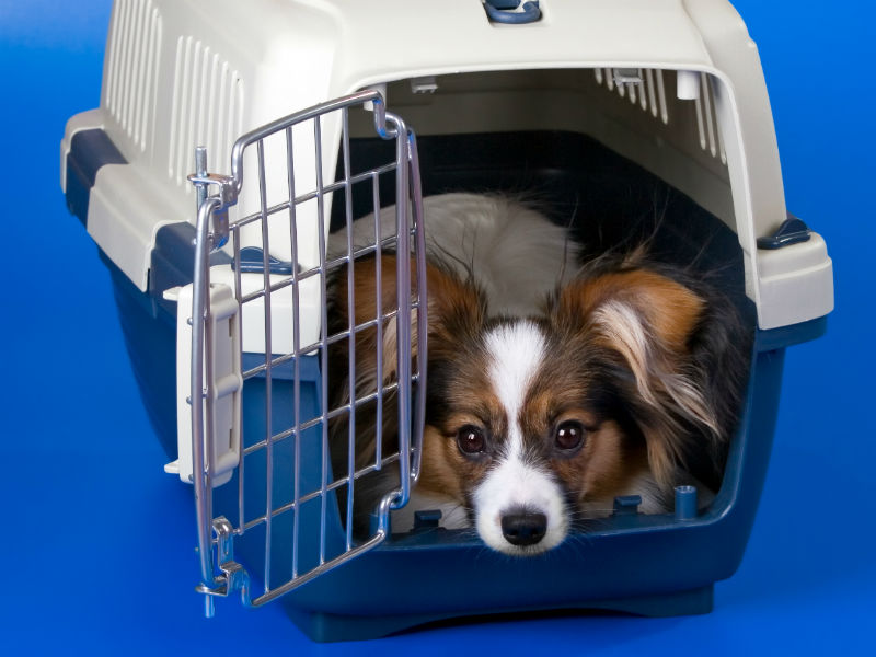 The Complete Guide to Traveling With Your Dog – American