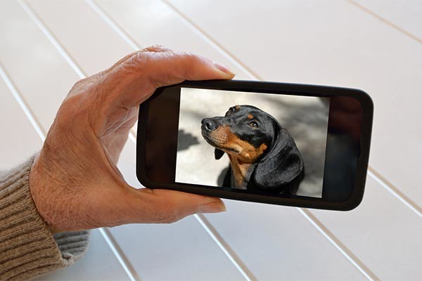 dachshund cell phone
