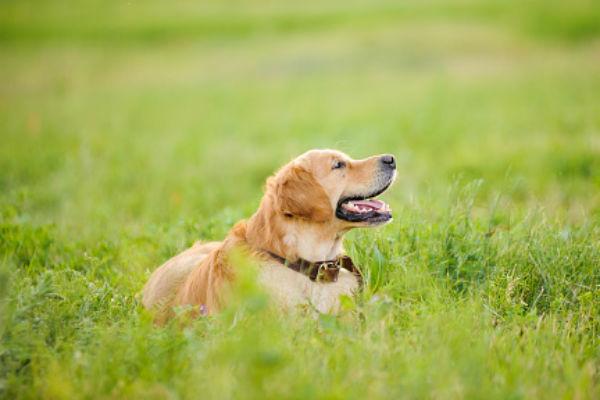 Do Dogs Get Diarrhea When In Heat