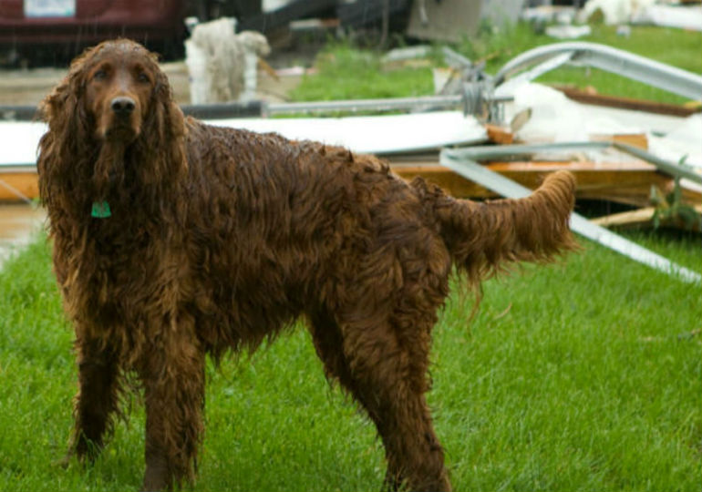 AKC Reunite Provides Support To Those Affected By The Louisiana and Mississippi Floods